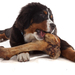 Gene mutation explains why some dogs work for treats