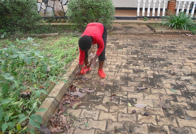 hildren can partake in simple chores like cleaning the compound hoto by andra yalitesa