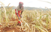 Food production to drop as climate changes