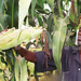 Fraudsters conning farmers for training abroad