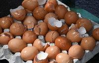 Tainted-eggs scandal reaches Italy