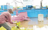 Water hyacinth threatens to choke L. Victoria again