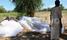 Mosquito nets used to trap white ants in Karamoja