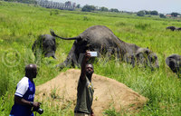 In pictures: Taking selfies with elephants