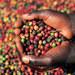 Uganda prepares for first international coffee auction