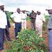 UCDA needs 200 million coffee seedlings