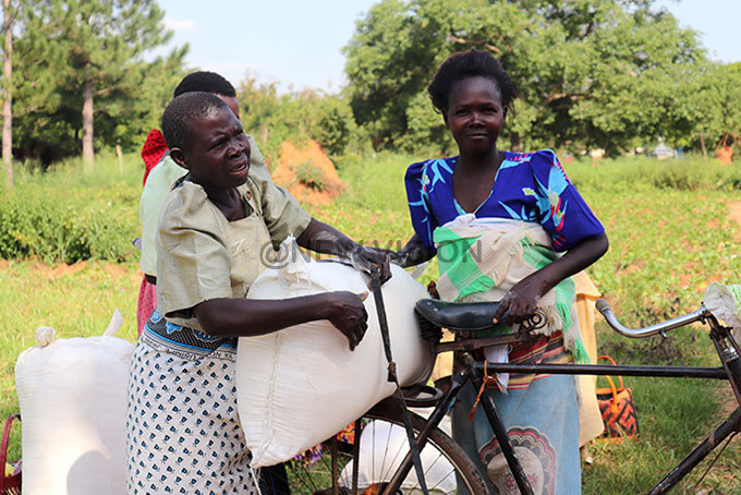 ustine angobi left with ewunia amusabi of kondwe subcounty uyende district loading cassava flour on the bicycle which was donated to them at their subcounty on hoto by aul iwuwa