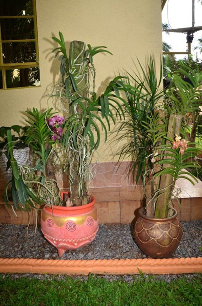 t doesnt matter whether one lives in a tight space such as an apartment very home owner can grow an orchid gardenhoto by itah ukasa