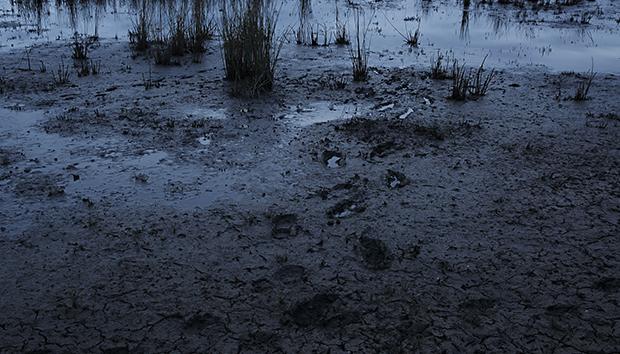 muddywaters100682389orig