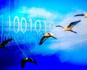 birdsmigrationsoftware100694799orig