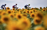 Tour de France postponed to Aug 29-Sep 20