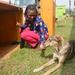 Stray dog rescued after festive season