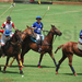 KNPC Polo tournament returns
