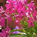 Colour up your yard with orchids