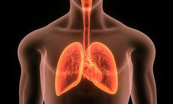 Lungsinsert 350x210