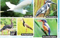 Uganda's bird side