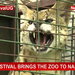 Toto festival brings the zoo to Namboole