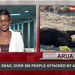 18 cattle dead, over 200 people attacked by anthrax in Arua