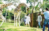 Tourists to be regulated as zoo re-opens