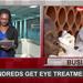 Around Uganda: Hundreds get eye treatment