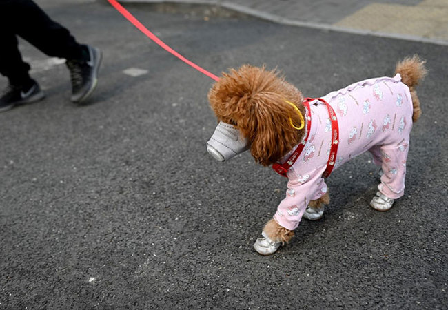 dog wears a mask over its mouth on a street in eijing on ebruary 13 2020