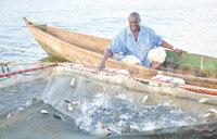 Uganda's fishy picture
