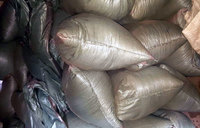 Suspected pangolin dealers arrested