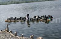 Salty environment rids Lake Katwe of life