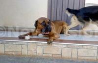 Dog on sale at sh9m