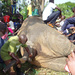 3 dead as Arua-Kampala bound bus knocks an elephant
