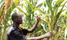 Unusual weather pattern to last for weeks, farmers warned