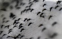 Warmer climate 'threatens malaria spread in Ethiopia'
