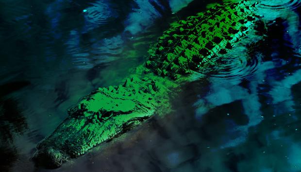 alligator100654985orig