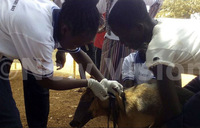 Rabies outbreak: One dead, three admitted, livestock infected