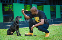Dogs can be trained to sniff out malaria: researchers