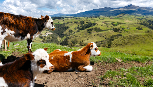 cows-and-clouds