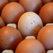 How fake eggs were discovered in Kampala