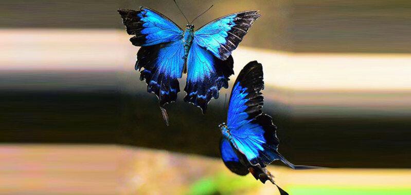 संबंधों में खुशहाली लाएंगी फेंगशुई तितलियां, जानें उपाय