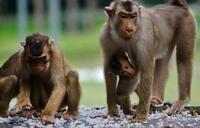 New AIDS drug shields monkeys - study