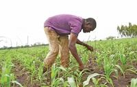 Food shortage looms as lockdown hits farmers