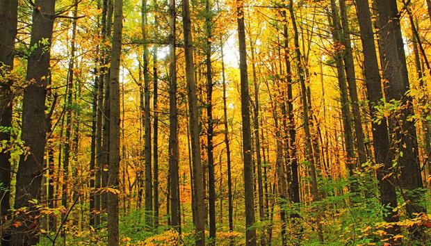 denseforest100568090orig