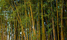Govt plans to plant 375,000 hectares of bamboo