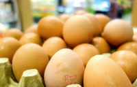Over 4 million eggs recalled in Poland