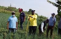 Sh600M solar irrigation scheme relieves Kabarole farmers
