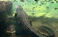 Selfie-seeking tourist bitten by crocodile