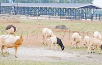 Mbarara livestock resource centre to boost farmers' income