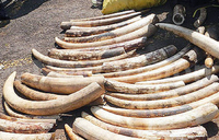 Britain to ban ivory sales