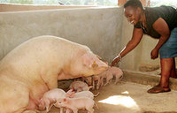 Piggery has given me hope for prosperity