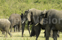 Elephant poaching 'costs Africa tourism $25m