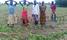 Hailstorm destroys 32 acres of crops in Koboko